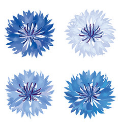 Floral bloom set flower cornflower summer nature vector
