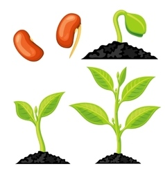 Plant growth stages from seed to sprout vector