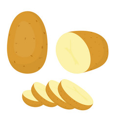 potatoes isolated on white background vector image