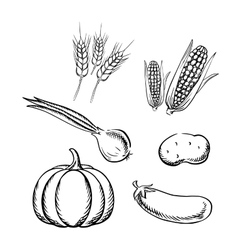 Ripe autumn vegetables and wheat sketch icons vector