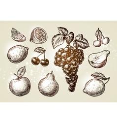 Set fruits sketch hand-drawn elements vector