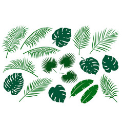 Set green palm leaves vector