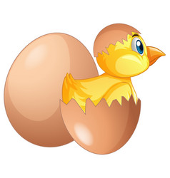 chick comes out of egg vector image