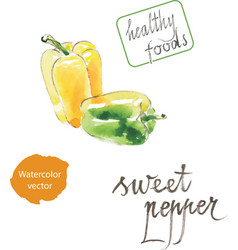 watercolor pepper vector image