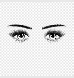 female eyes silhouette with eyelashes and vector image