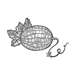 melon plant sketch engraving vector image