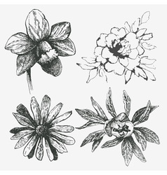 set of flower vector image