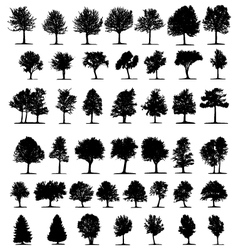 silhouette of trees vector image vector image