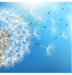 dandelion blowing on blue background vector image vector image