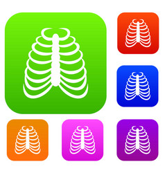 rib cage set collection vector image