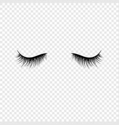 Black eyelashes false eyelashes isolated vector