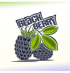 Blackberry still life vector