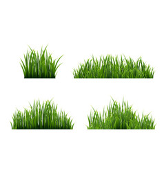 Grass border with white background vector