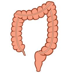 Human large intestine vector