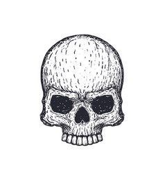 Human skull on white hand drawn vector
