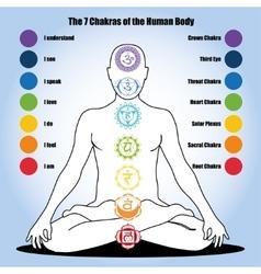 Seven chakras human body vector