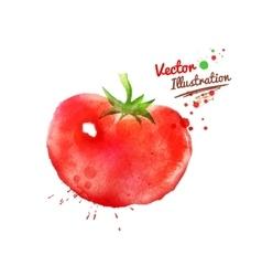 Watercolor tomato vector