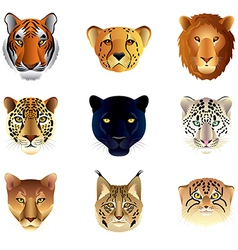 big cats heads set vector image
