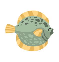 Flat flounder fish part of mediterranean sea vector