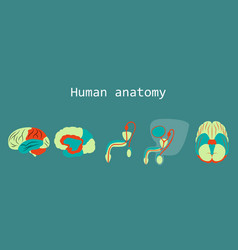 Human body internal organs medical flat isolated vector