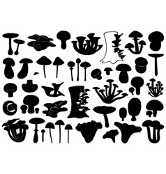 Set Of Different Mushrooms vector