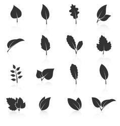 Set of leaf icons on white background vector image