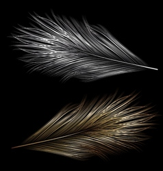 Two isolated feather vector