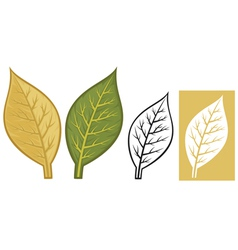 Tobacco leaves vector