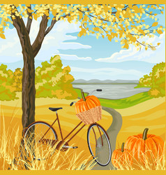 autumn landscape with with bicycle and pumpkins vector image
