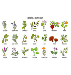 collection of best herbs for healthy heart vector image
