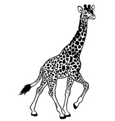 Giraffe black white vector