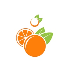 Orange and mandarin vector