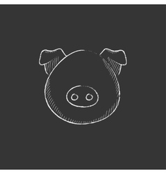 Pig head Drawn in chalk icon vector image