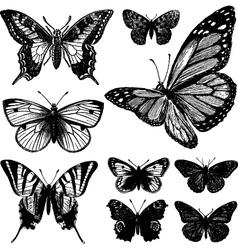 Butterflies vector