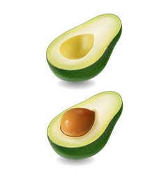 ffresh fruit avocado isolated realistic vector image vector image