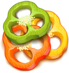 pepper slice isolated vector image