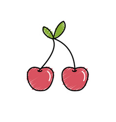 Delicious and healthy cherry fruit vector