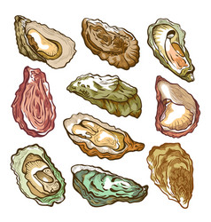 fresh oyster hand drawn set on white vector image