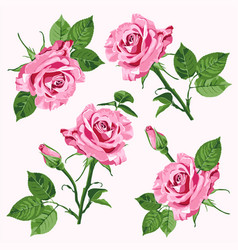 pink roses and leave seamless pattern vector image