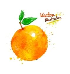 Watercolor orange vector image