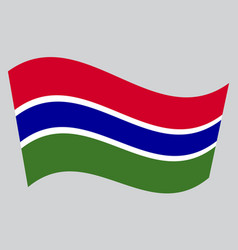 flag of the gambia waving on gray background vector image