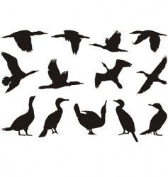 collection cormorant vector image vector image