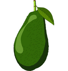 avocado isolated on white background vector image
