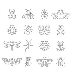 insect line icons vector image