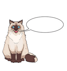 isolated object on white background pet siamese vector image
