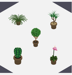 Isometric houseplant set of tree peyote grower vector
