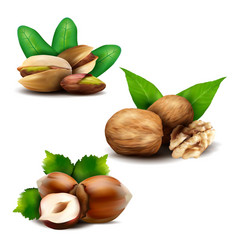 set of realistic nuts with leaves vector image