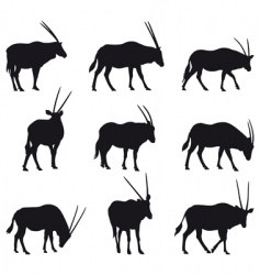 Oryx gazelle vector image