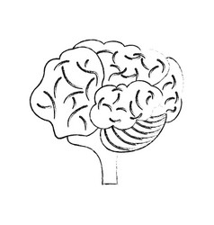 sketch brain human creativity concept vector image