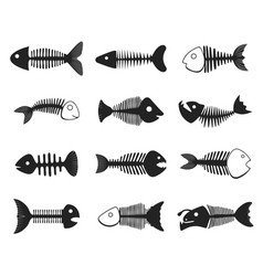 fish skeleton set vector image